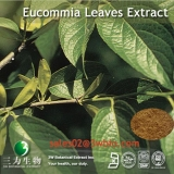 Eucommia leaves extract
