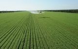Agricultural Spray Adjuvant
