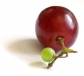 Grape skin plant extract