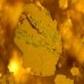 Antimony Sulphide